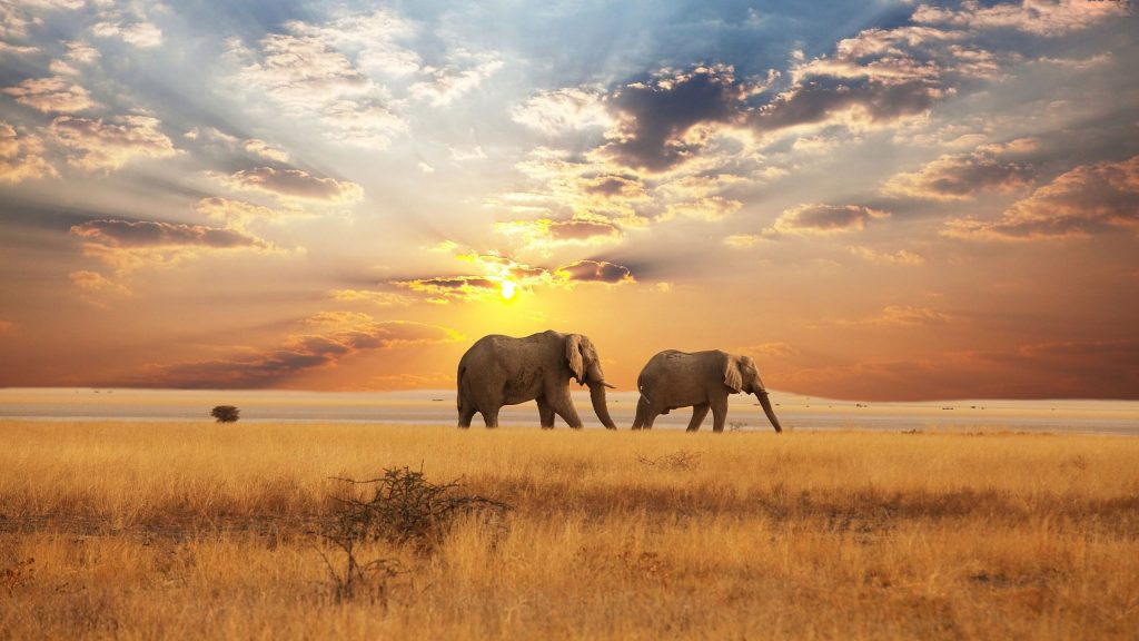 South Africa, Victoria Falls and Mauritius - 20 Days